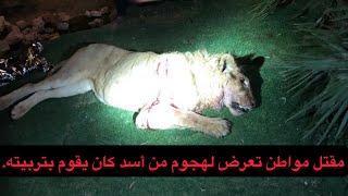 حادث مؤلم في الرياض اسد ياكل من يقوم بتربيته