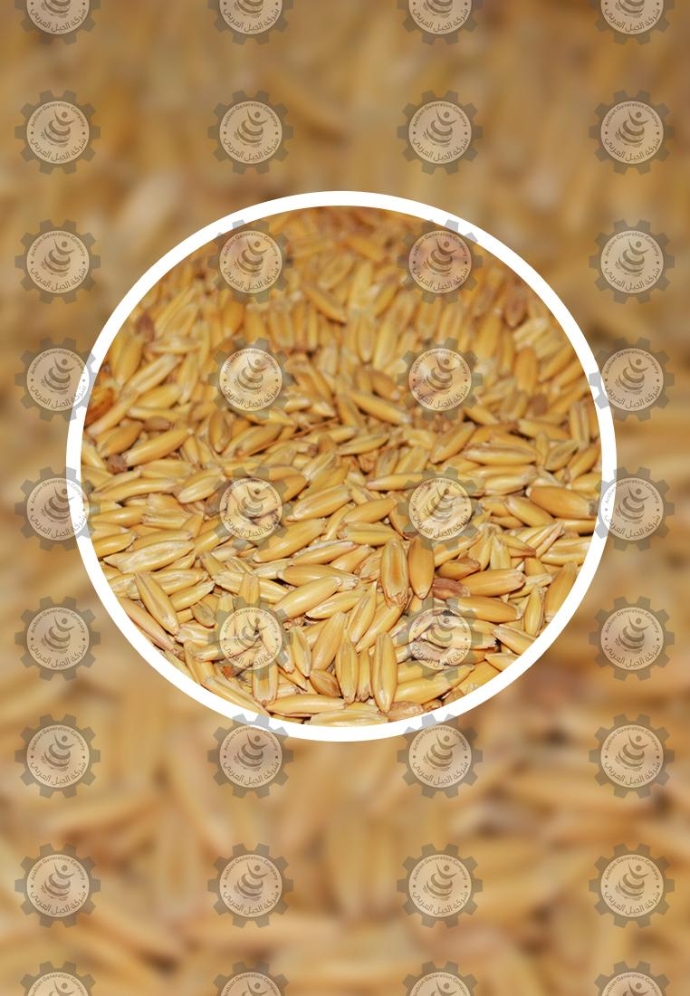 Special offer Oats from Arabian d.php?hash=XC2RGEKQJ