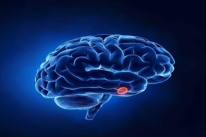 # هرمونات يفرزها الدماغ في جسم الانسان مهمة للغاية #